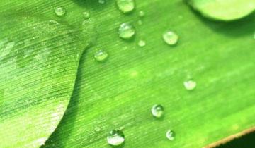 L'importanza del drenaggio per sostenere la nostra salute
